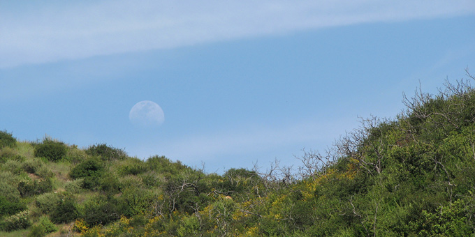 moonrise over hillside