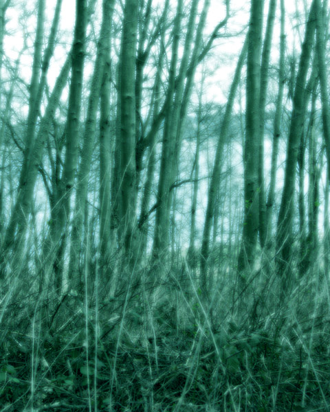 thickets tall photo art