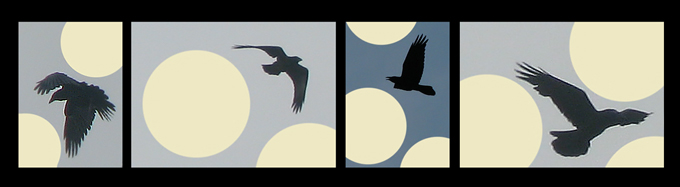 Common Raven & moons, artwork