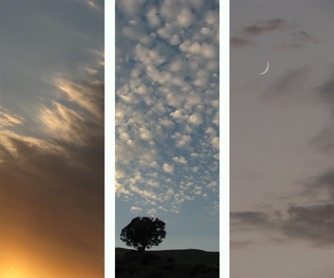 sky, tree & moon triptych