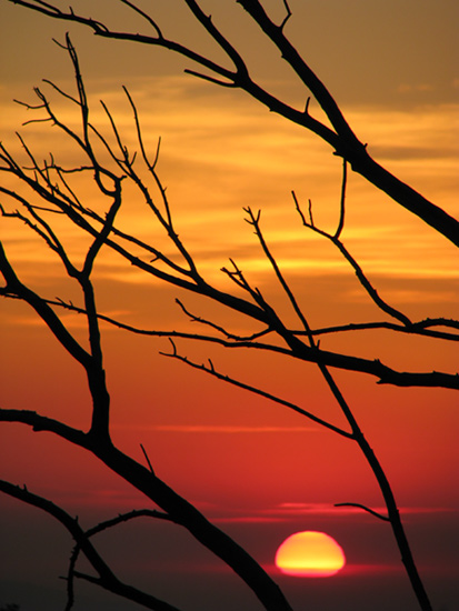 January sunset & branches