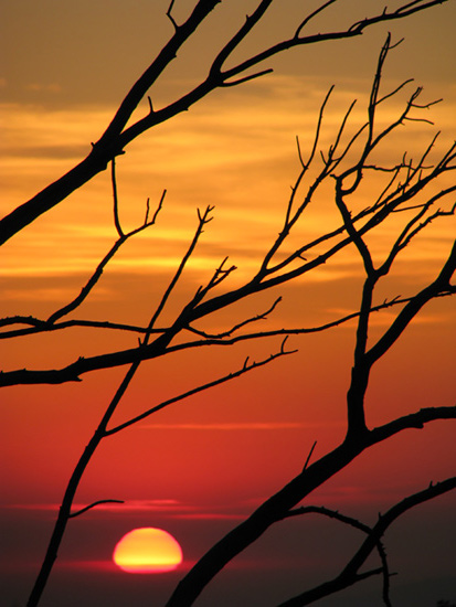 January sunset & branches, flipped