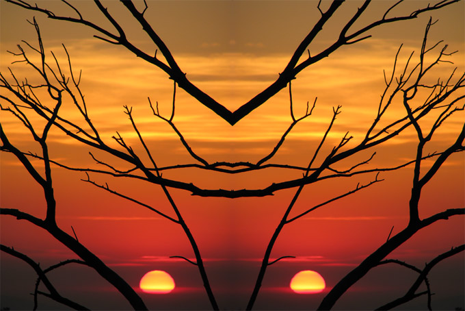 January sunset & branches, side-by-side