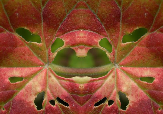 geranium, flipped